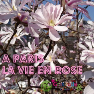 paris-vie-en-rose